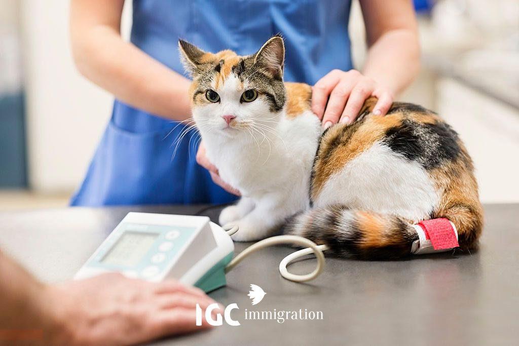 Cơ hội việc làm khi du học ngành thú y tại Canada