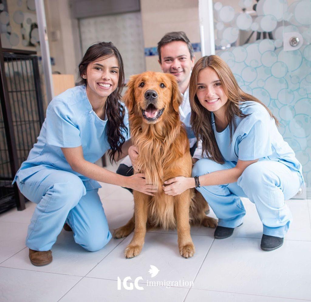 Những yêu cầu để du học ngành thú y