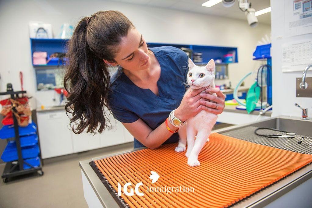 Du học Canada ngành thú y đem lại công việc thu nhập cao